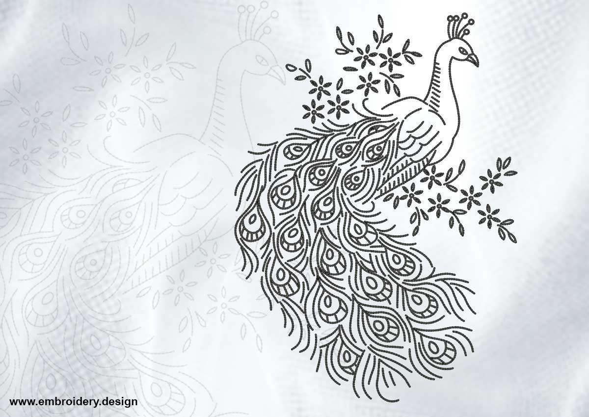 Pensive peacock