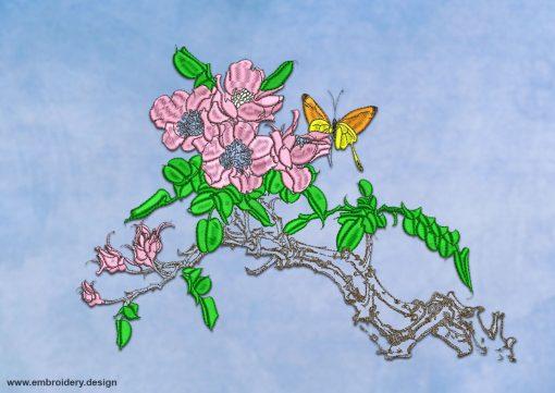 This Sakura bloom
